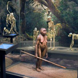 Utställningen Den mänskliga resan på Naturhistoriska riksmuseet