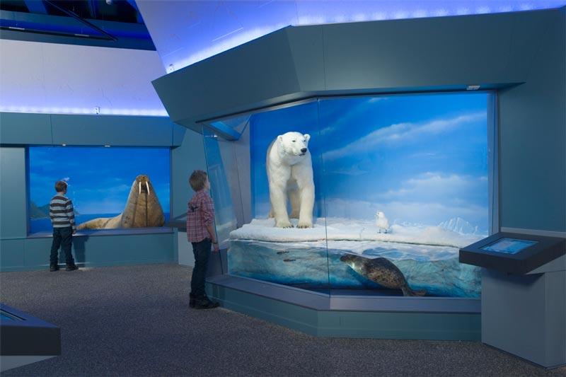 Utställningen Polartrakterna på Naturhistoriska riksmuseet