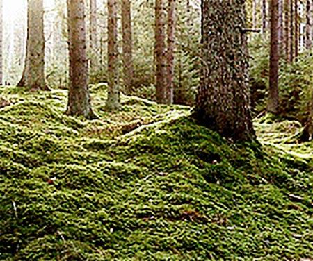 Trollkäringeskogen utanför Finspång